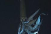 Elusive giant squid captured on video