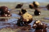 The BP oil spill four years later
