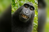 Monkey selfie sparks copyright fight