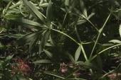 Can a tax on marijuana help Colorado and...
