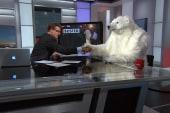 Arrested polar bear talks to Chris Hayes