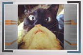 Click3: Cat bearding is a thing now