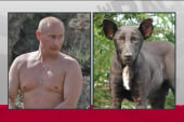 Ukraine stray a Putin dog doppelganger
