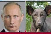 2013 Bests: The Putin dog