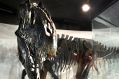 Dinosaur find cited as proof of Bible story