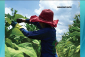 The kids toiling on America's tobacco farms