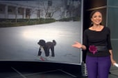 Melissa Harris-Perry: We need more...
