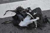 'Solid leads' identified in Boston bombing