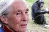 Following chimpanzees in the wild