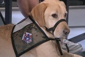 Organization pairs service dogs with...