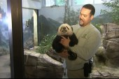 Baby panda makes public debut at DC zoo
