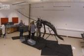 Time lapse of dinosaur skeleton construction