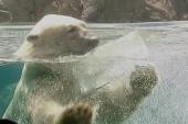 Happy International Polar Bear Day!