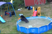 Bear family has a pool party in New Jersey