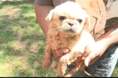 Puppy rescued, reunited with young owner