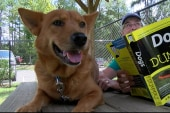 Shelter dogs and cats help kids read in SC