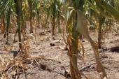 Worst drought in decades devastates farm...