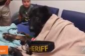 ICYMI: Police bid farewell to canine Argo