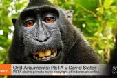 Oral Arguments: Monkey selfies & copyright?