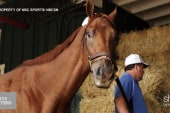 'A day in the life' of American Pharoah...