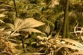 Colorado pot stores rake in big bucks