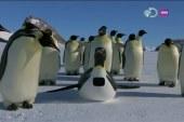 Penguin documentary uses new spy-cameras