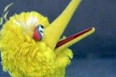 Is Big Bird really in danger?