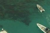 American killed by shark in Australia