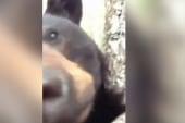Black bear climbs tree and gets really...