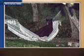 Florida bear lounges out in a hammock