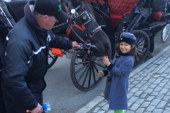 A 6-year-old & the horse carriage ban