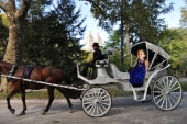 A kindergartner takes on horse carriage ban