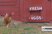 Hatching an egg brand in a crowded space