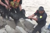 See moment adorable pup is rescued from flood