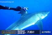Your Business: Swimming with Sharks