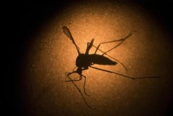 Baby with Zika virus born in New Jersey