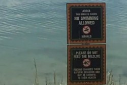 Disney takes precautions amid alligator...