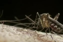 Klain: Consequences for not acting on Zika