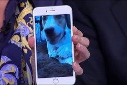 Mika adopts a rescue dog