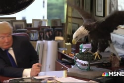 Trump vs bald eagles: Inside a push to gut law protecting animals