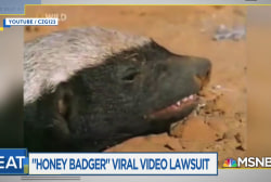 Viral Honey Badger video creator: Donald Trump is no Honey Badger
