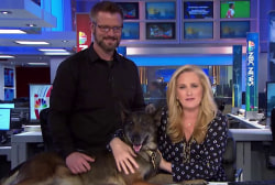 A special look at heroic military dogs, trainers
