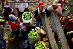 Report exposes brutal farm worker conditions