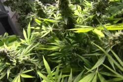 Fight over Colorado pot law