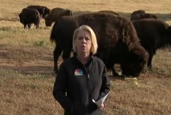 Bison take the brunt of California drought