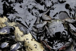 Oil spill cause could take months to find