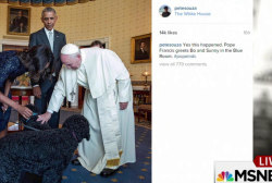 Pope Francis a hit on social media