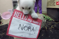 Polar bear cub at Columbus Zoo now has a name