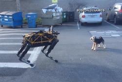 'Robotic dog' Spot meets Alex, a real dog