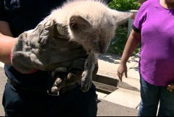 Tiny kitten rescued from storm drain